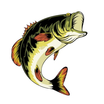 Ilustracja ryb basowych