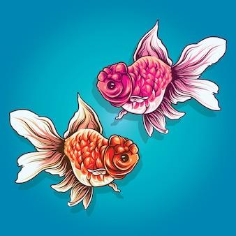Ilustracja ryby oranda
