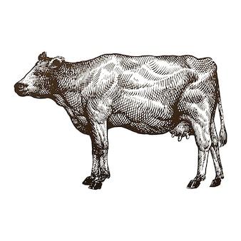 Ilustracja rysunek ręka krowy