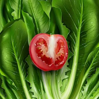 Ilustracja sałata i pomidor