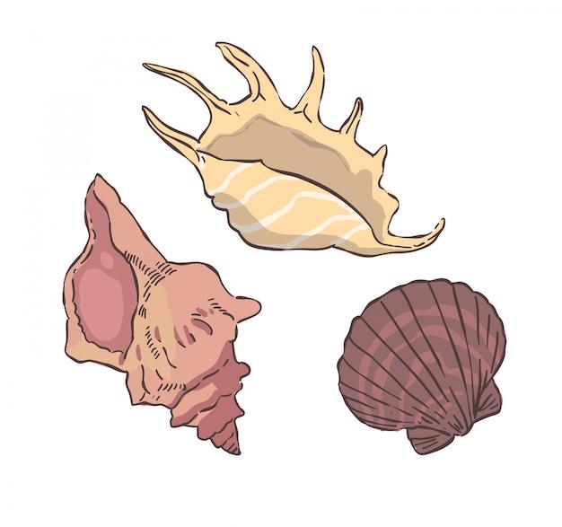 Ilustracja skorupiaków