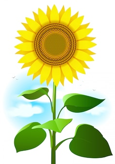 Ilustracja słonecznika. kreskówki rysunek kwiat, liście i chmury.
