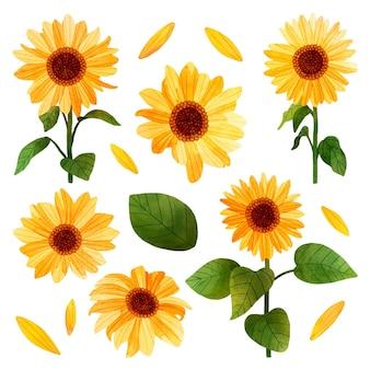 Ilustracja słonecznika w ręcznie malowanym stylu