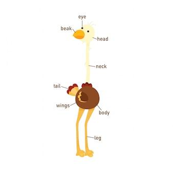 Ilustracja strusia słownictwo część ciała