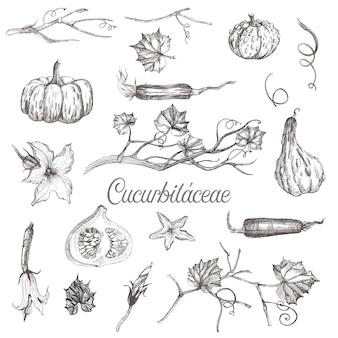 Ilustracja szkic warzyw dyniowatych