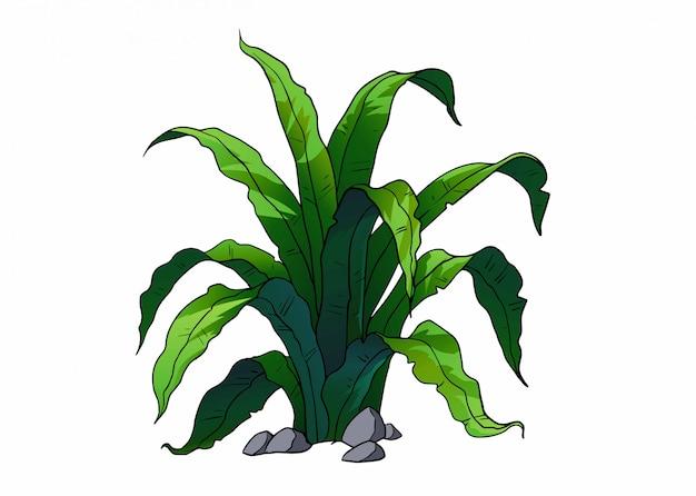 Ilustracja tropikalnej rośliny