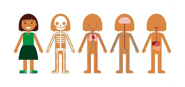 Ilustracja wektorowa anatomii ciała