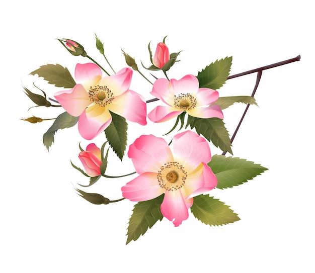 Ilustracja wektorowa bukiet różowych róż