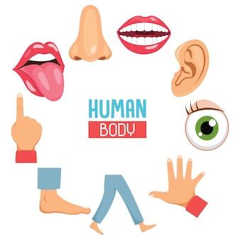 Ilustracja wektorowa części ludzkiego ciała