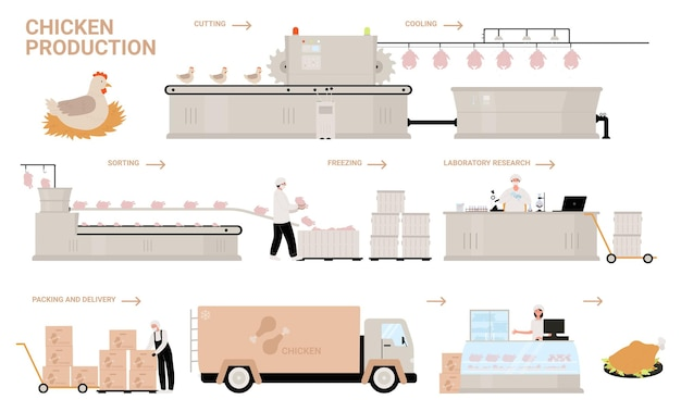Ilustracja wektorowa etapy procesu produkcji kurczaka.
