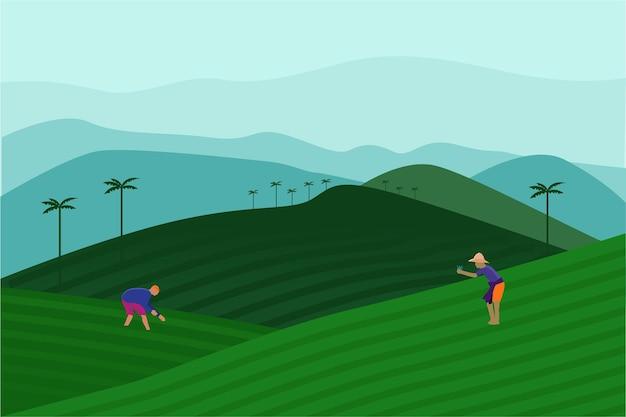 Ilustracja wektorowa farmy herbaty
