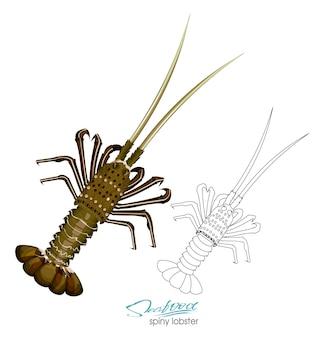 Ilustracja wektorowa homara kolczasty w stylu kreskówki na białym tle liniowa sylwetka kolczastego homara
