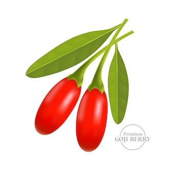 Ilustracja wektorowa jagody goji