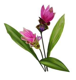 Ilustracja wektorowa kwiat siam tulip