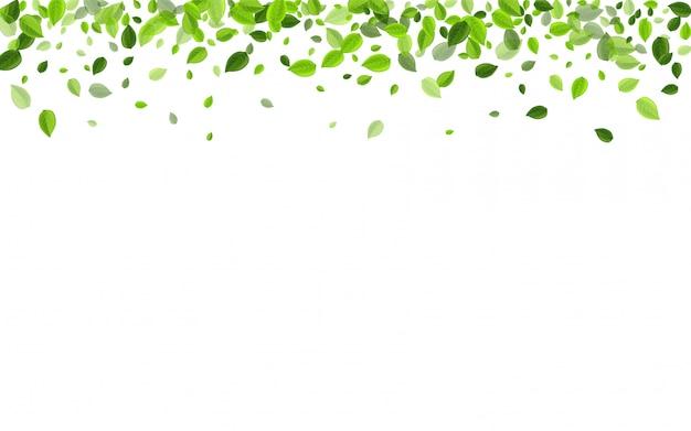 Ilustracja wektorowa las liści oliwnych.