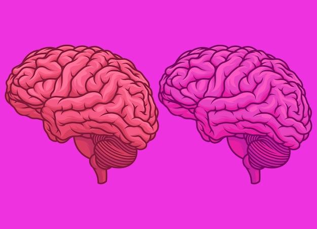 Ilustracja wektorowa mózgów na izolowanym obiekcie