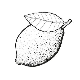 Ilustracja wektorowa owoce cytryny z liściem ręcznie rysowane szkic zdrowe wegetariańskie jedzenie cytrusowe