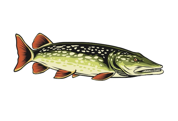 Ilustracja wektorowa północnej ryby szczupak