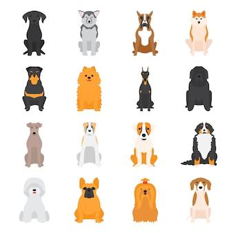 Ilustracja wektorowa różnych psów rasy na białym tle.