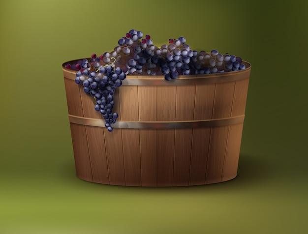 Ilustracja wektorowa świeżo zebranych winogron do wina w drewnianej kadzi na zielonym tle