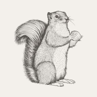 Ilustracja wektorowa wiewiórka realistyczna