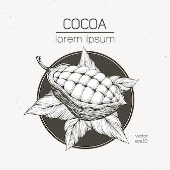 Ilustracja wektorowa ziarna kakaowego. ilustracja w stylu retro grawerowane. czekoladowe ziarna kakaowe.