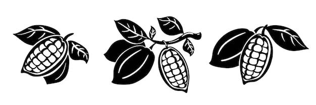 Ilustracja wektorowa ziarna kakaowego. ziarna kakaowe na gałęzi z liśćmi na białym tle.