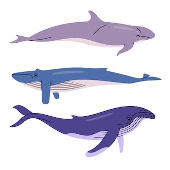 Ilustracja wielorybów. fałszywy orka, płetwal błękitny, humbak. białe tło.