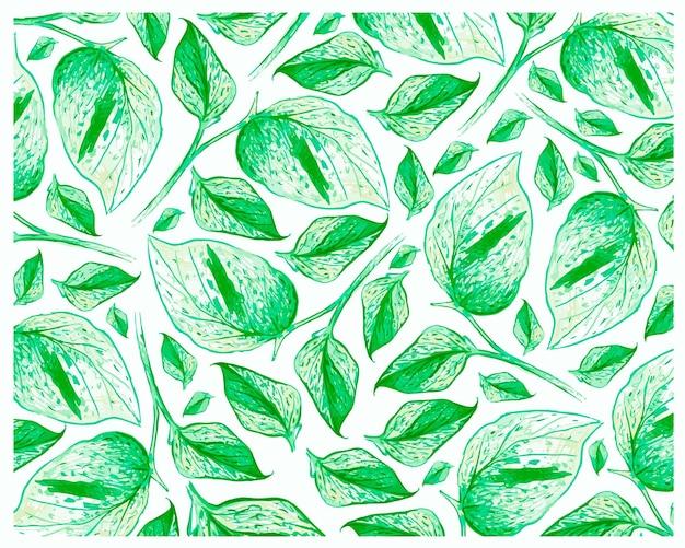 Ilustracja wzór golden pothos lub ivy arum plants