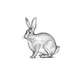 Ilustracja zając zwierzęta leśne.
