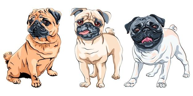 Ilustracja zestaw ładny pies rasy mops