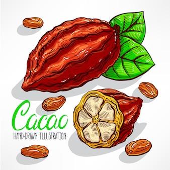 Ilustracja ziaren kakaowca