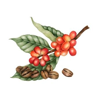 Ilustracja ziaren kawy