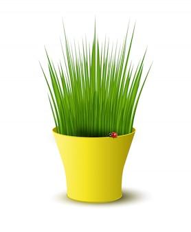 Ilustracja żółty garnek z zieloną trawą