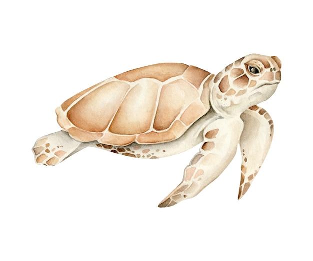 Ilustracja żółw