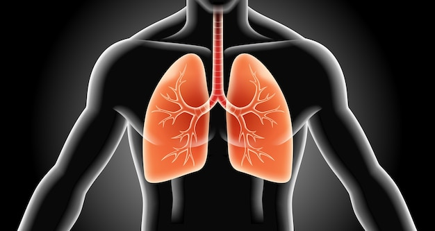 Ilustracje rtg płuc