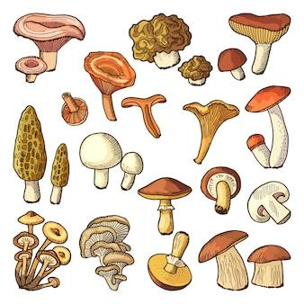 Ilustracje wektorowe kolorowych grzybów.
