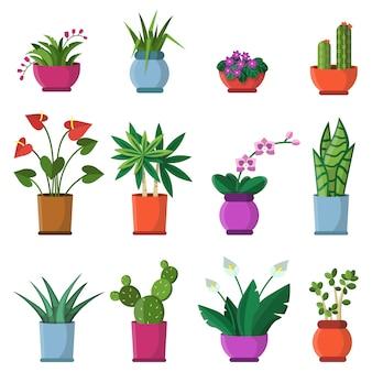 Ilustracje wektorowe roślin domowych w doniczkach