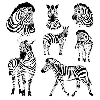 Ilustracje zebry