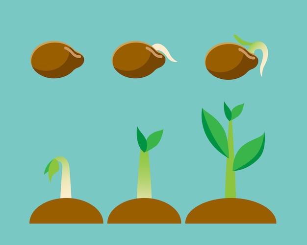 Ilustracji wektorowych o nasionach, proces uprawy roślin.