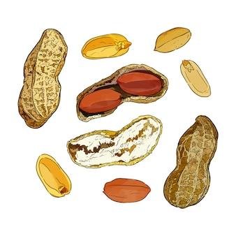 Ilustracji wektorowych zestaw orzeszków ziemnych