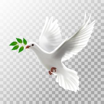 Ilustracyjny biały gołębi latanie z liściem na przejrzystym