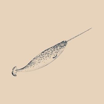 Ilustracyjny rysunkowy stye narwhal