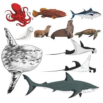 Ilustracyjny rysunkowy styl morska życie kolekcja