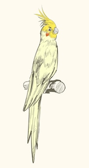 Ilustracyjny rysunku styl papuga
