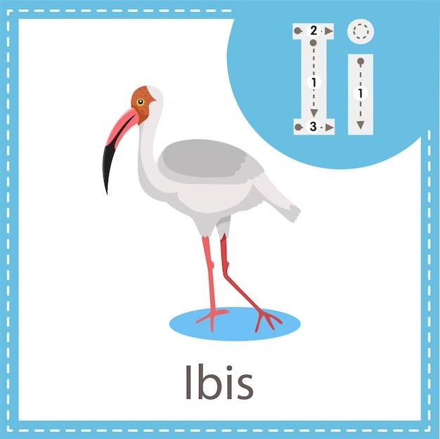 Ilustrator ibis ptak