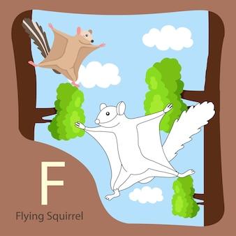 Ilustrator latającej wiewiórki na białym tle i kolorowaniu