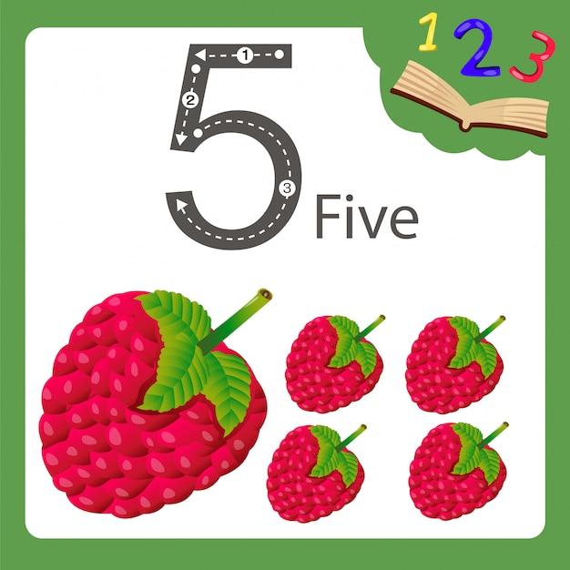 Ilustrator pięciu liczb malin