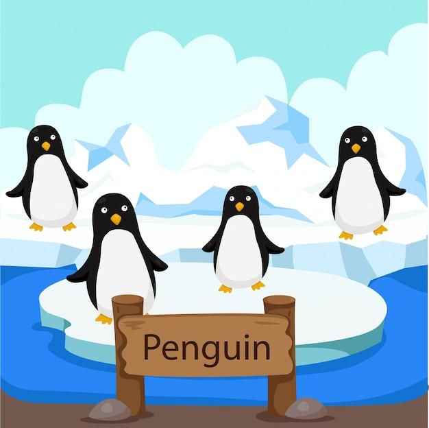 Ilustrator pingwin w zoo