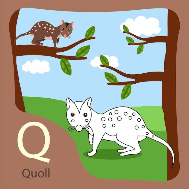 Ilustrator quoll izolowany i kolorowanie